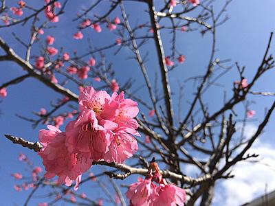 エステサロン近く名護市の桜